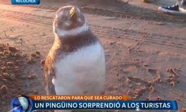 Necochea en TELEFE… gracias a un pingüino