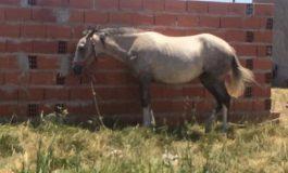 Reclaman por un caballo que está atado y abandonado