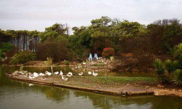 Propuesta para invertir 14 millones de pesos en el Lago de los cisnes