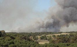 Voraz incendio destruyó un pinar, campos y un sector de Costa Bonita